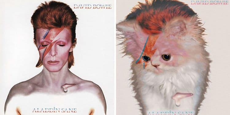 ablum covers replaced with kittens 3 (1)