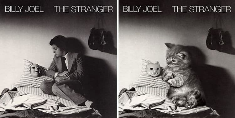 ablum covers replaced with kittens 4 (1)