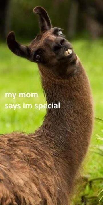 alpaca puns 22 (1)