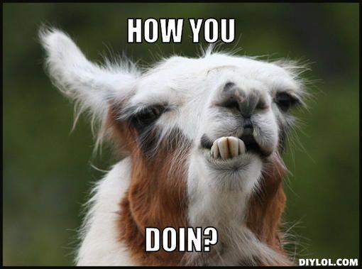alpaca meme list 24 (1)