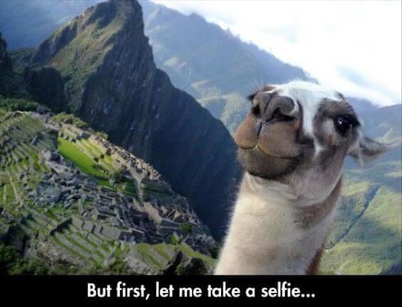 alpaca meme list 28 (1)