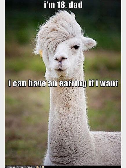 alpacas are beautiful 32 (1)