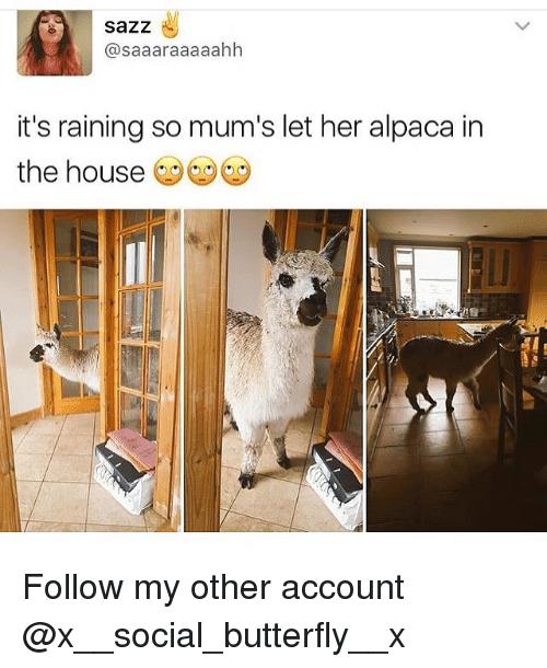 alpacas are beautiful 37 (1)