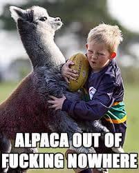 alpaca memes 40 (1)