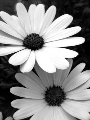 black and white pictures of flowers 1 (1)