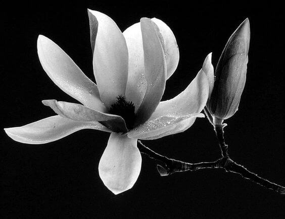 black and white images of flowers 10 (1)