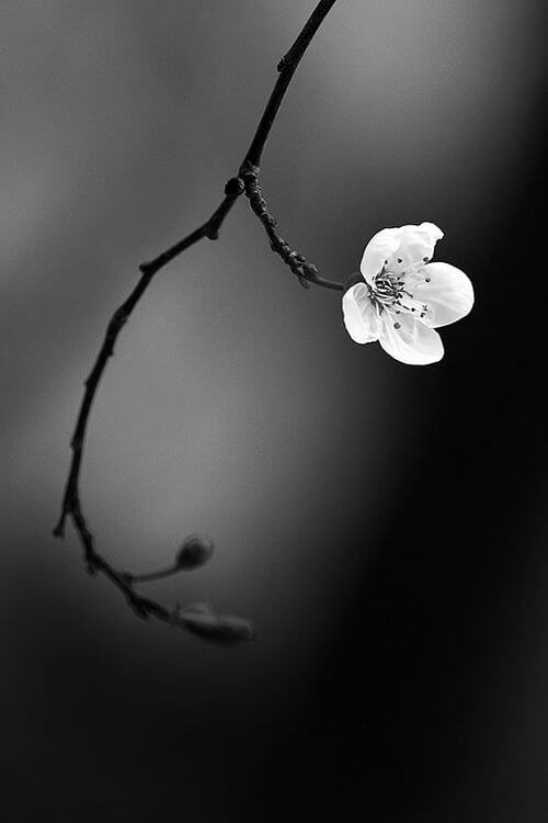colorless pictures of flowers 18 (1)