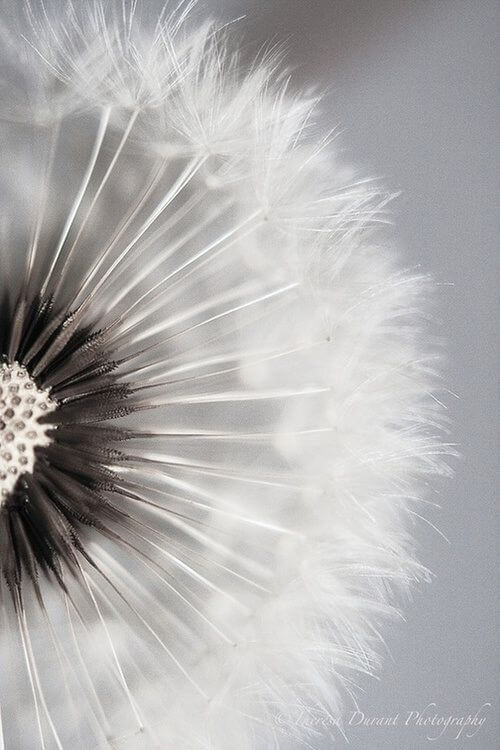 colorless pictures of flowers 21 (1)
