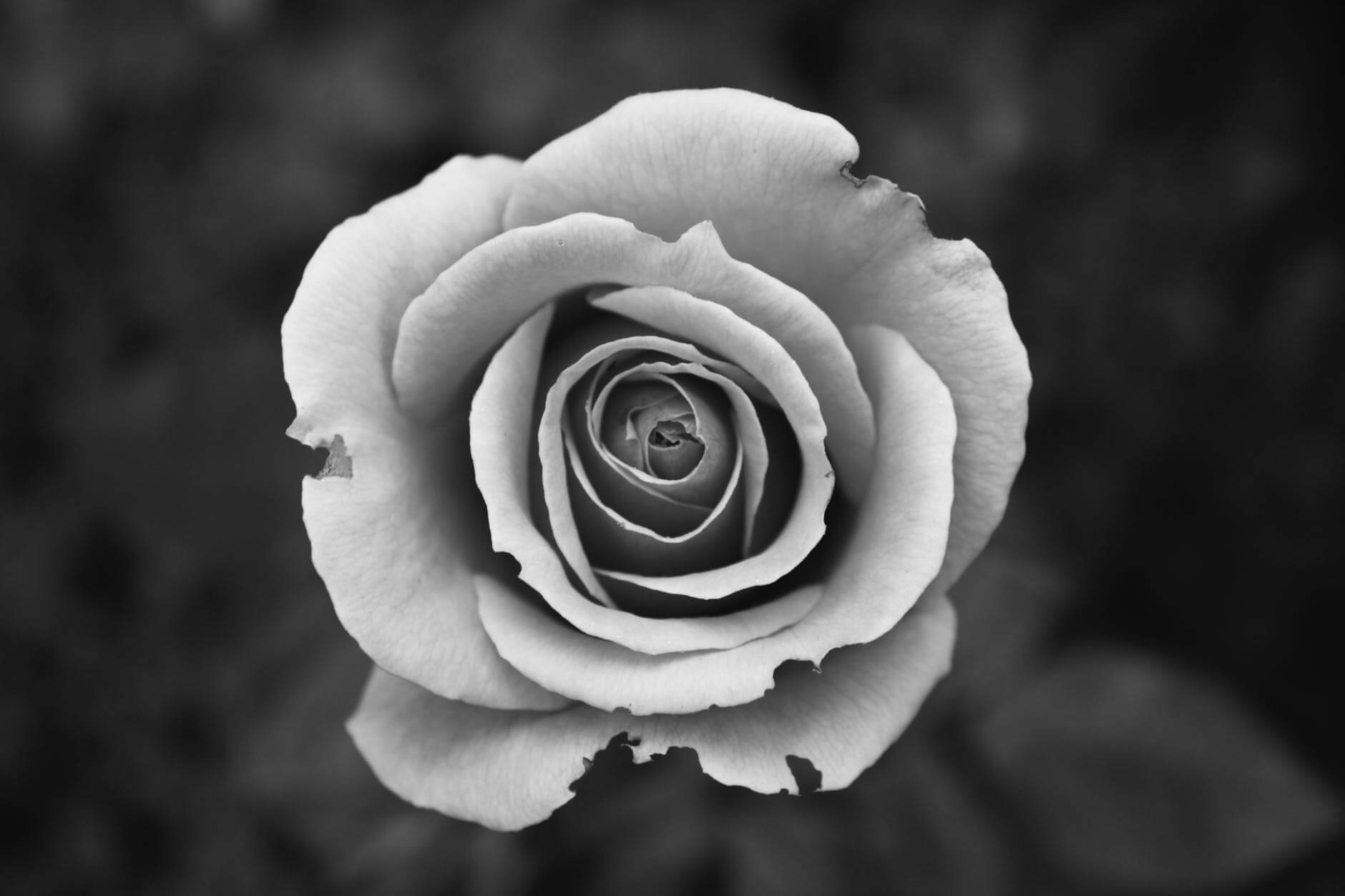 how to take black and white pictures 23 (1)