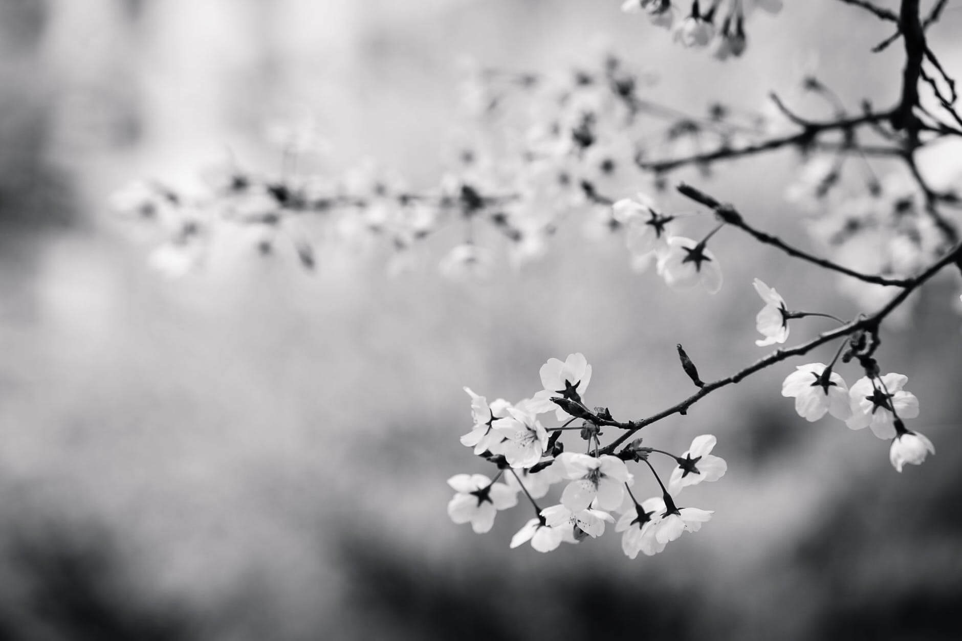 how to take black and white pictures 24 (1)