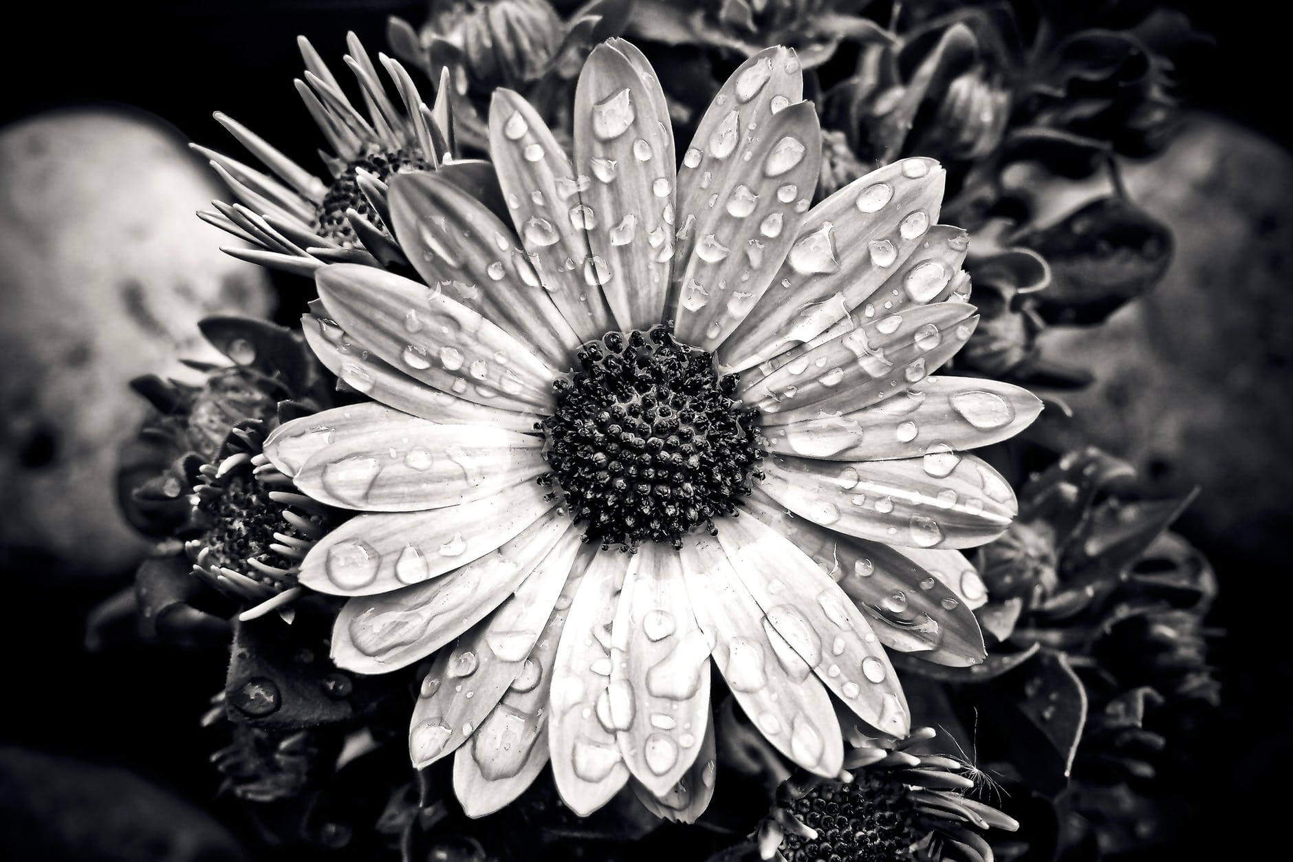 30 Black And White Pictures Of Flowers With Tips On How To ...