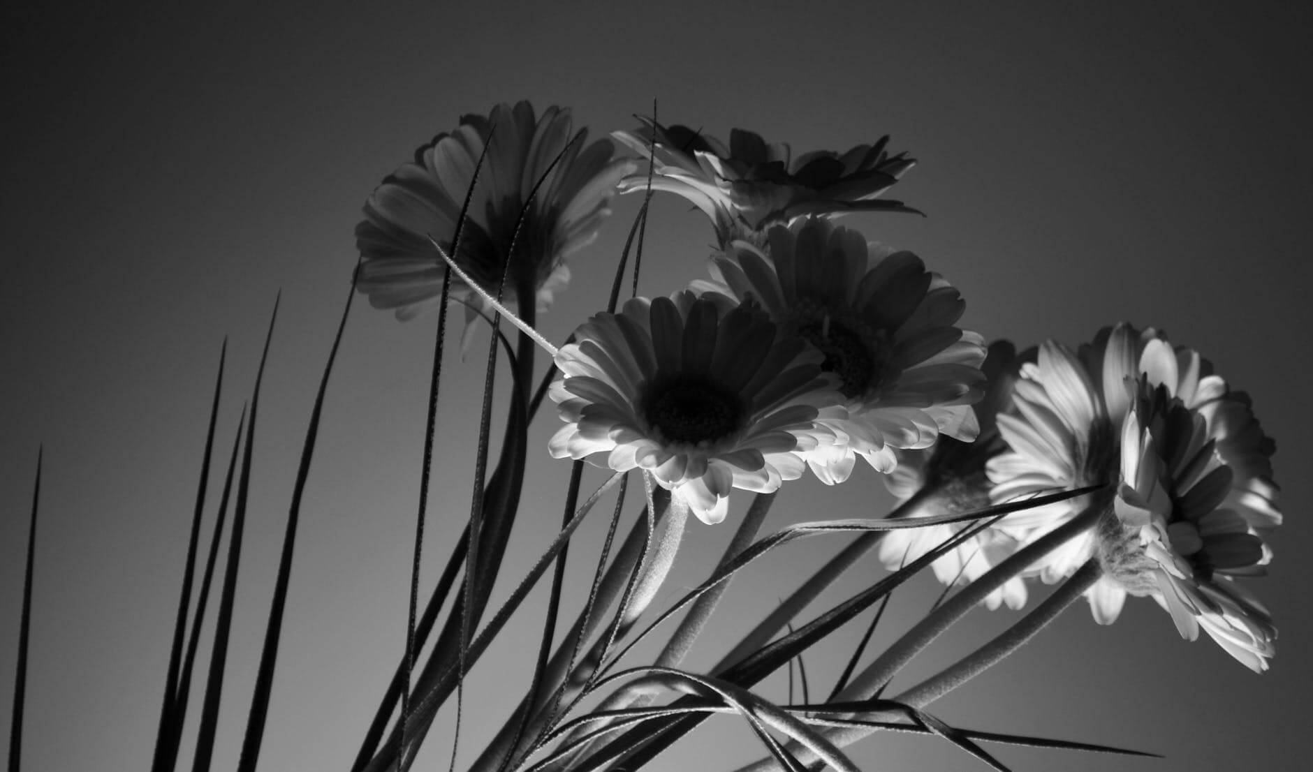 how to take black and white pictures 27 (1)