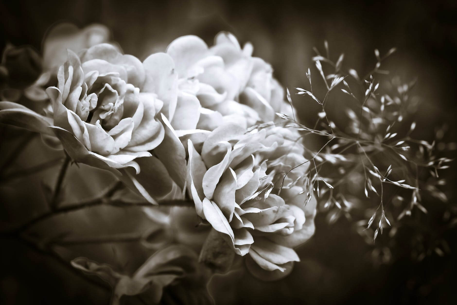 how to take black and white pictures 28 (1)