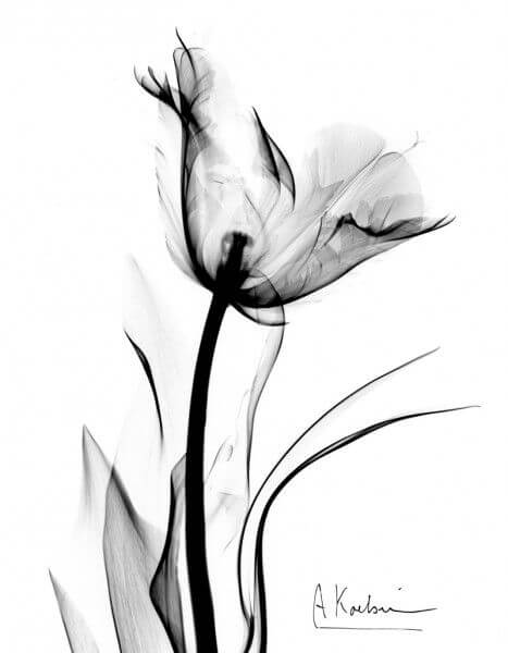 black & white pictures of flowers 5 (1)
