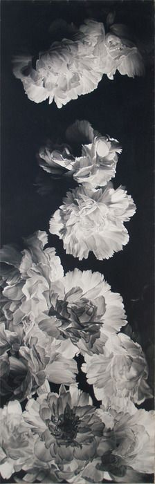 black & white pictures of flowers 7 (1)