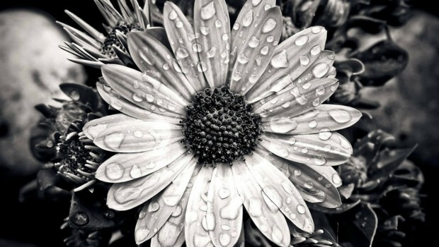 30 black and white pictures of flowers with tips on how to shoot the perfect black white