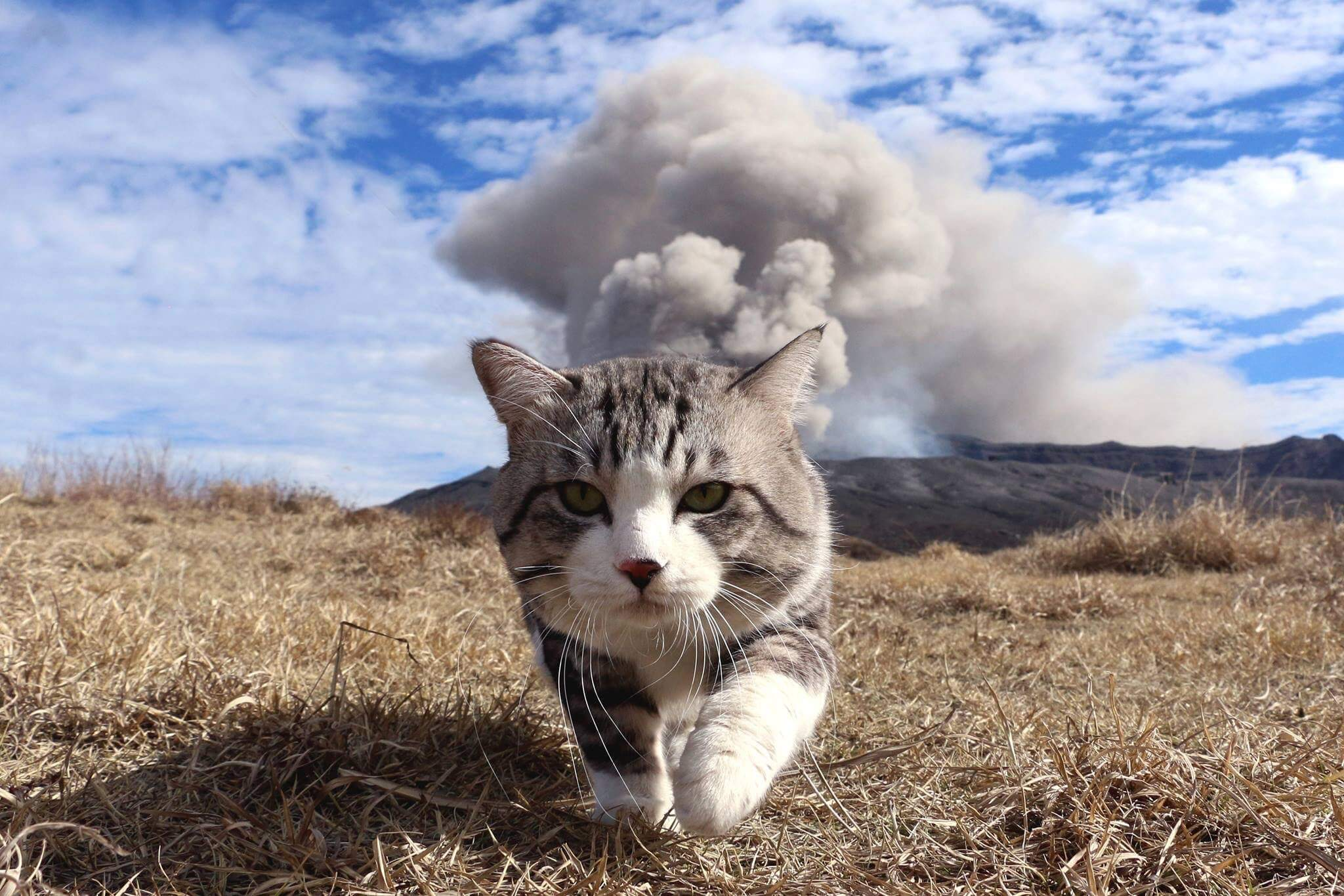 cat walking away from explosion 1 (1)