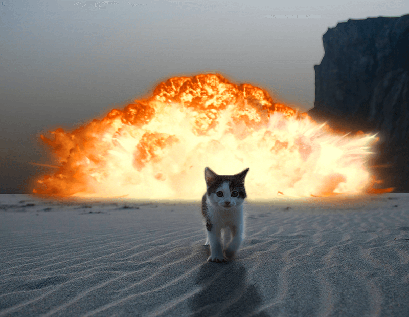 cat walking away from explosion 10 (1)