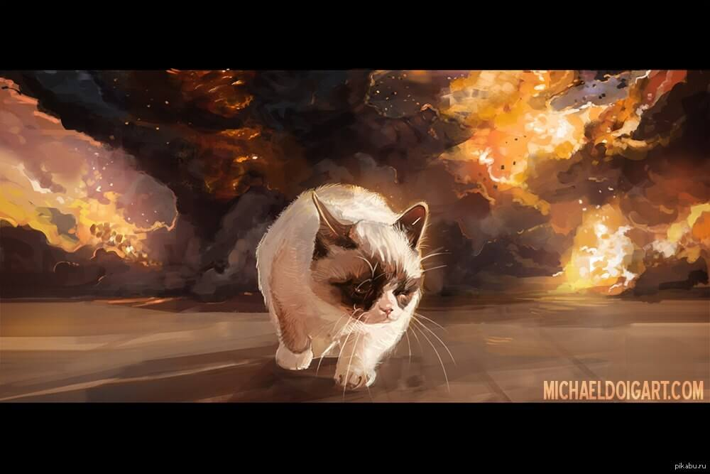 cat walking away from explosion 11 (1)