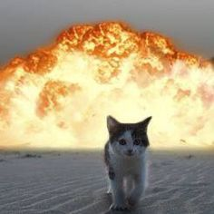 cat walking away from explosion 13 (1)