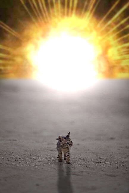 20 Cats Walking Away From Explosions As a Parody To Cool ...