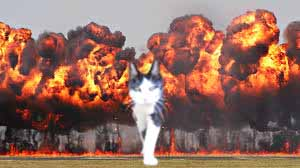 cat walking away from explosion 16 (1)