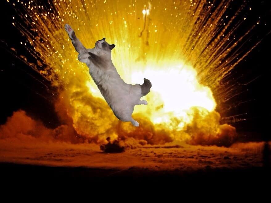 cat walking away from explosion 17 (1)