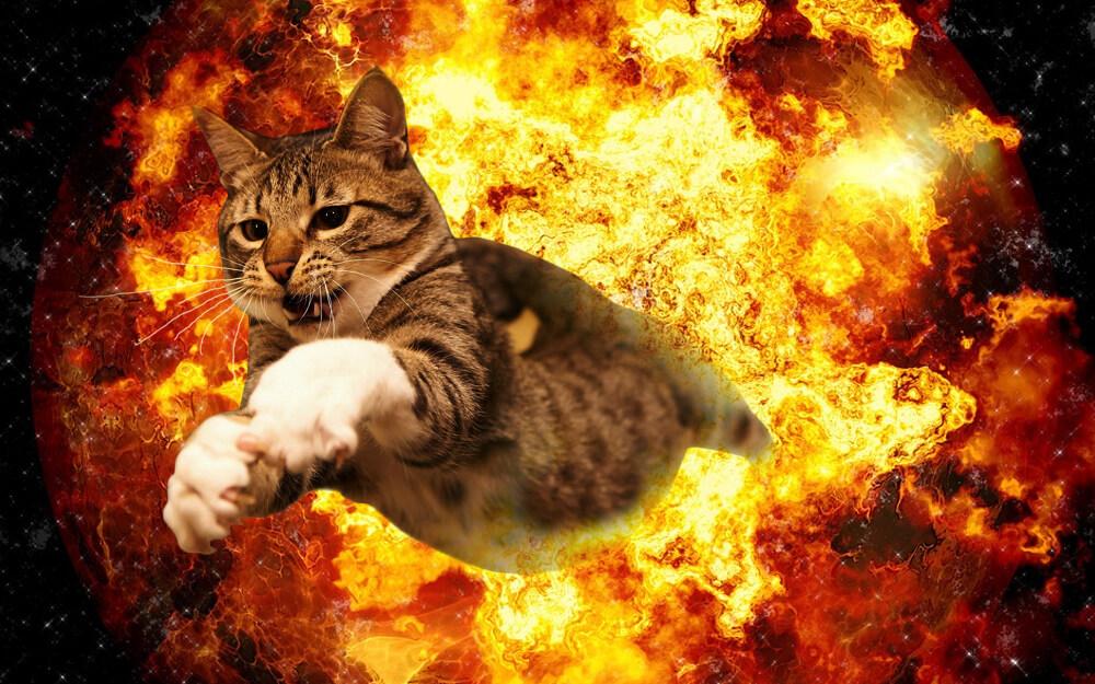 cat-walking-away-from-explosion-18-1.jpg