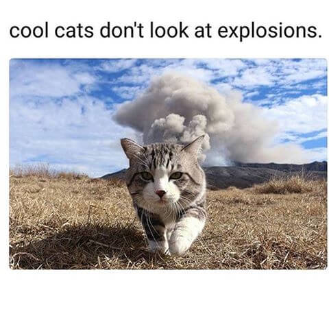 cat walking away from explosion 19 (1)