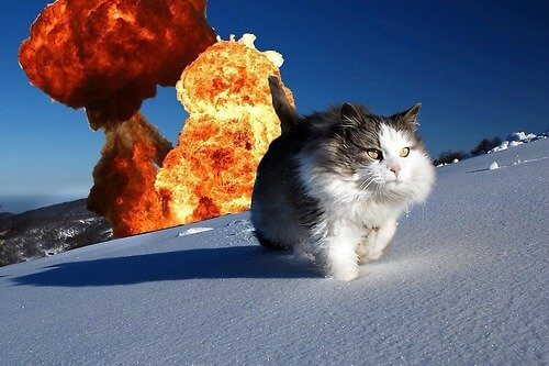 cat walking away from explosion 2 (1)