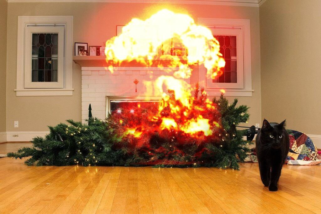 cat walking away from explosion 21 (1)