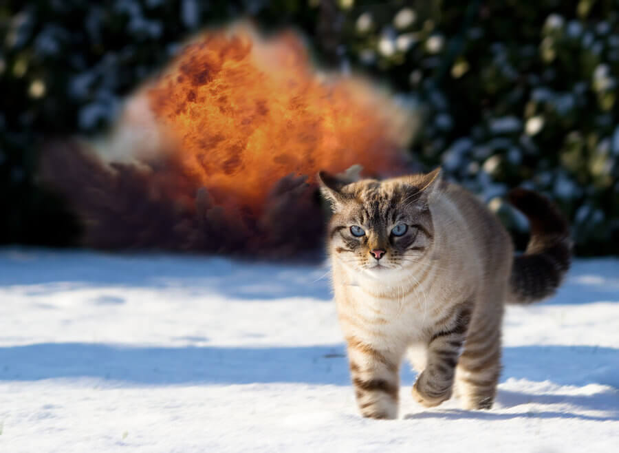 20 Cats Walking Away From Explosions As a Parody To Cool