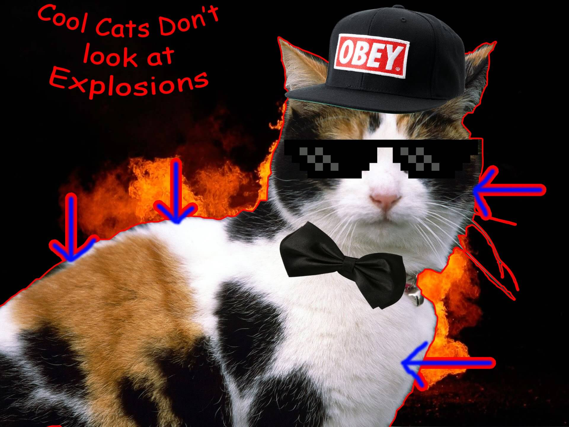 cat walking away from explosion 5 (1)