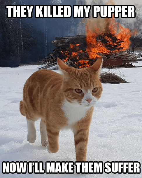 cat walking away from explosion 8 (1)