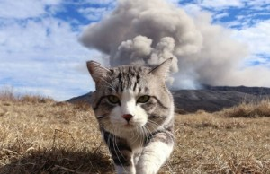 cats walking away from explosions feat (1)