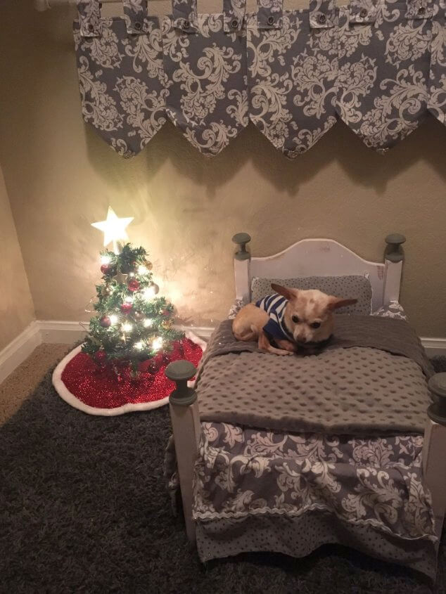 Owner Surprised Her Tiny Chihuahua With A Mini Christmas