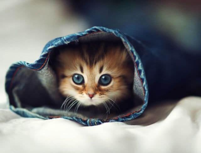 cute animals 13 (1)