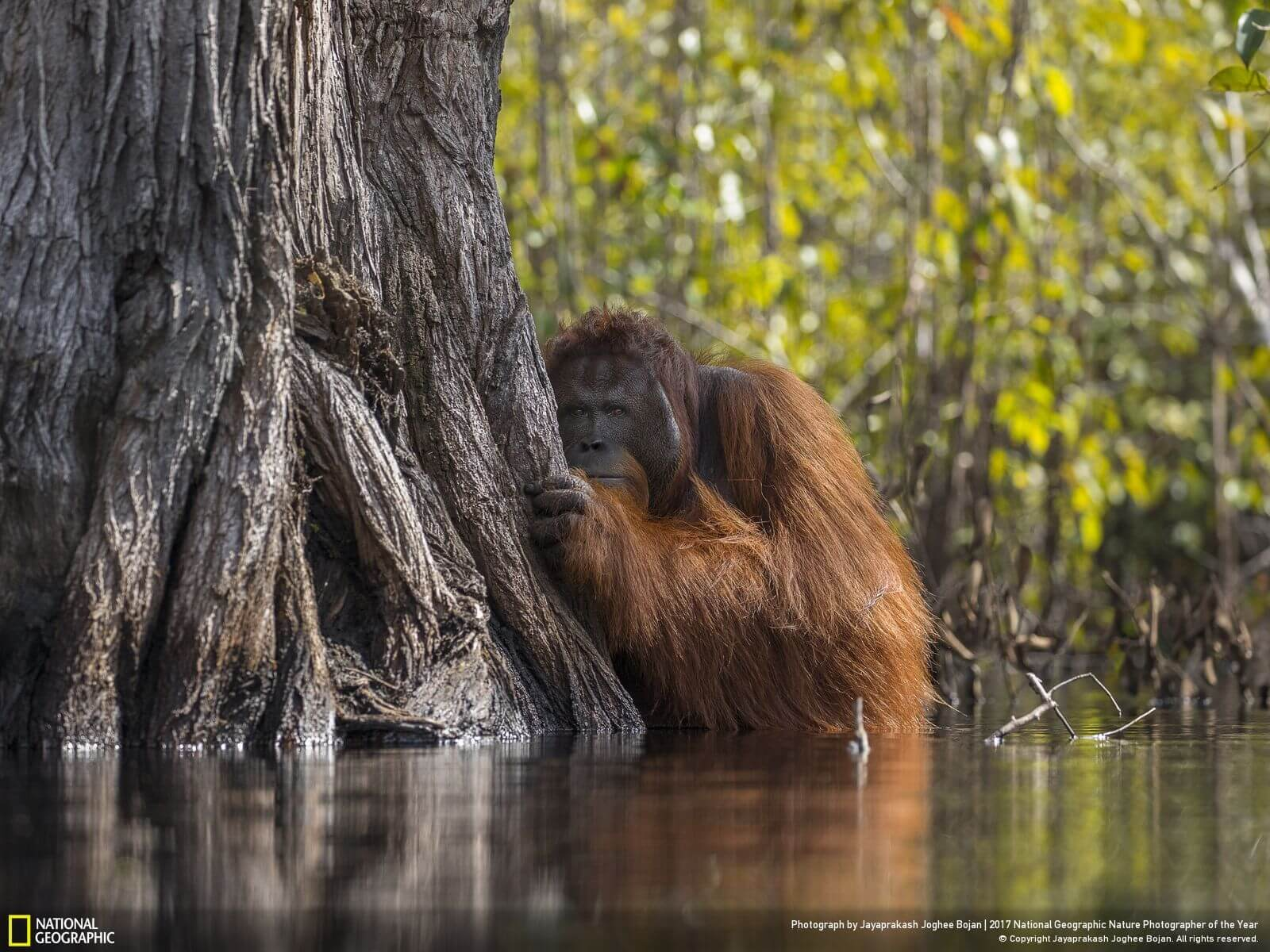 national geographic nature photographer of the year winners 1 (1)