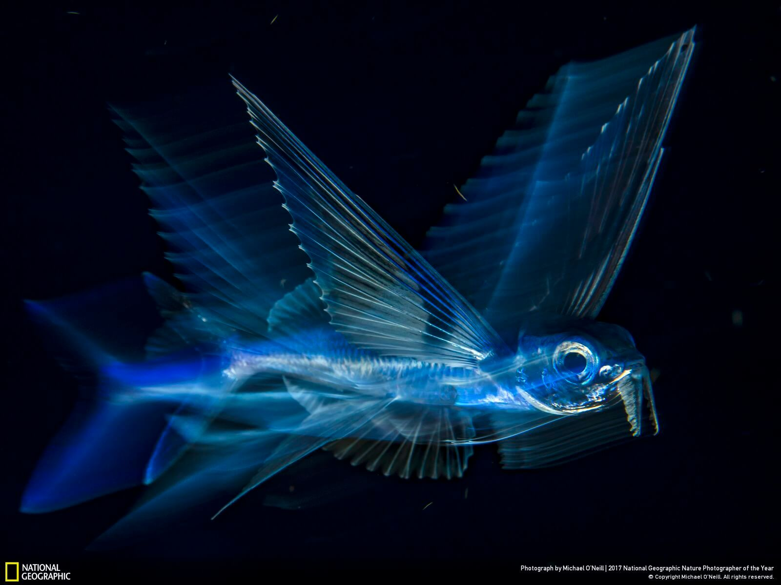 national geographic nature photographer of the year winners 16 (1)