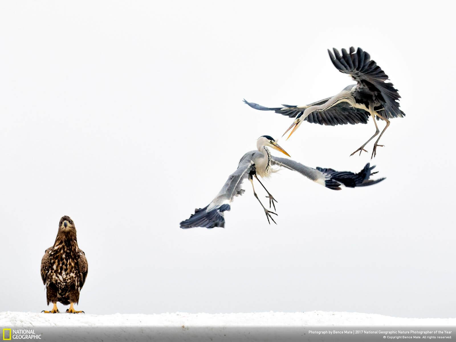 national geographic nature photographer of the year winners 3 (1)