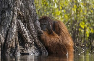 national geographic nature photographer of the year winners feat (1)