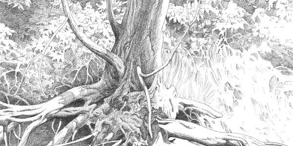 pencil drawings of nature 1 (1)