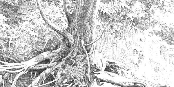 pencil drawings of nature 1 (1)
