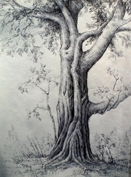 pencil sketch of nature 16 (1)