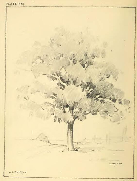pencil drawings of nature 8 (1)
