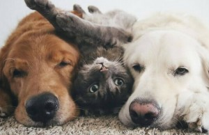 two dogs and a cat feat (1)