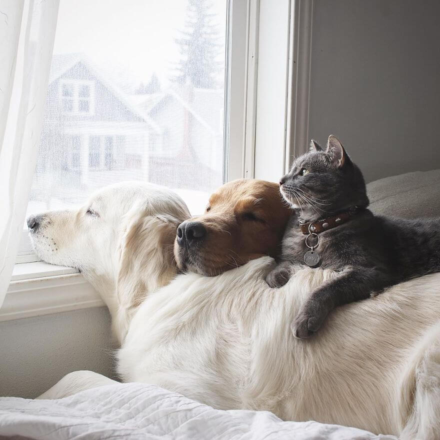 38 Pictures Of Two Dogs And A Cat Who Just Love Doing