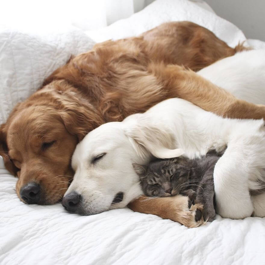 dogs and cat napping 13 (1)