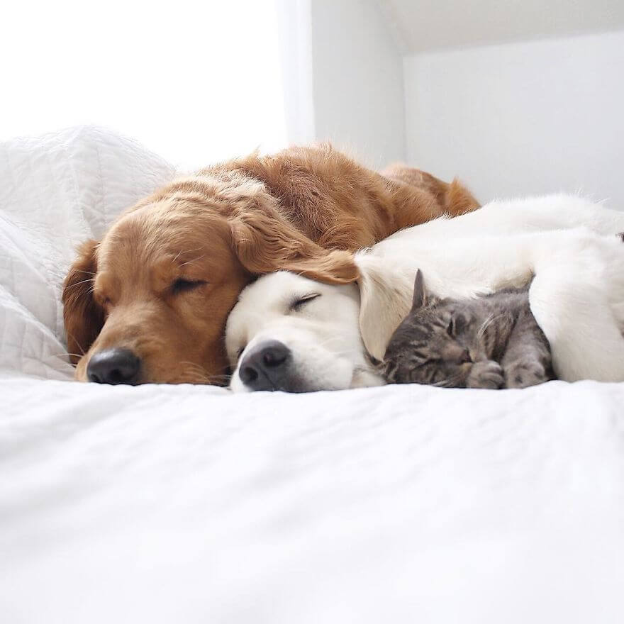 dogs and cat napping 15 (1)