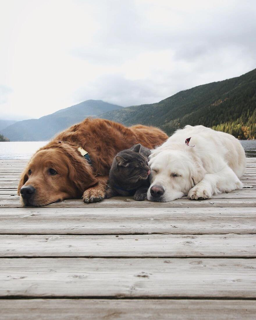 dogs and cat napping 16 (1)